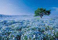 ジグソーパズル パズルの超達人EX(日本風景)ネモフィラの丘-茨城 1053ピース (31-003)[エポック]《取り寄せ※暫定》