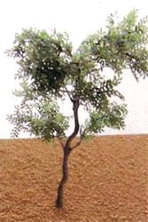 00502 リアルツリーシリーズ シナの木(街路樹) A80EX[フローベルデ]《在庫切れ》