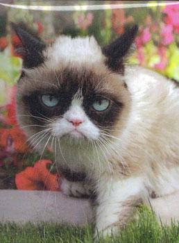 デッキボックス(仕切板付き) 気難し屋の猫と花[Ultra・PRO]《在庫切れ》