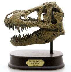ティラノサウルス スカル&ジョーズモデル(リニューアル版) 単品