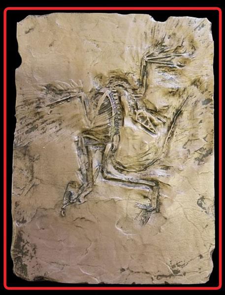 1/5 アーケオプテリクス (始祖鳥) ミニプレート 未塗装レジンキット[MASTERPIECE MODELS]《在庫切れ》