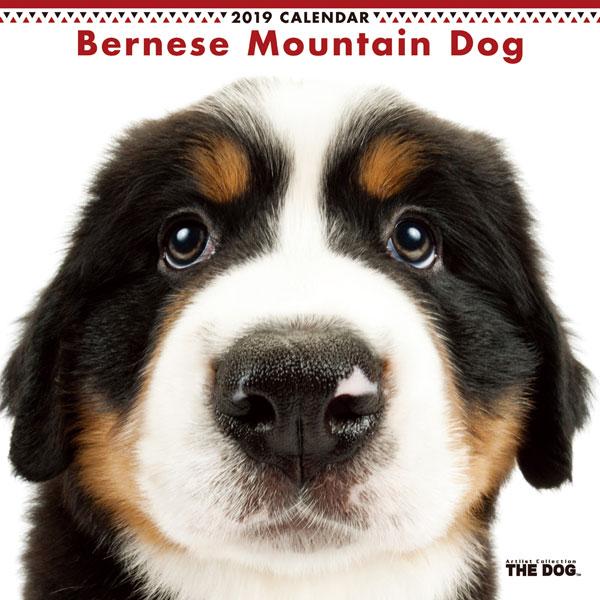 THE DOG カレンダー バーニーズマウンテンドッグ (2019年)[アーリスト]《発売済・在庫品》