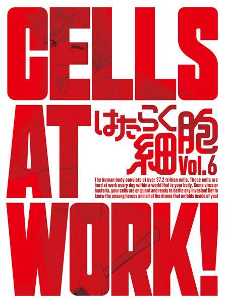 BD はたらく細胞 6 完全生産限定版 (Blu-ray Disc)[アニプレックス]《在庫切れ》