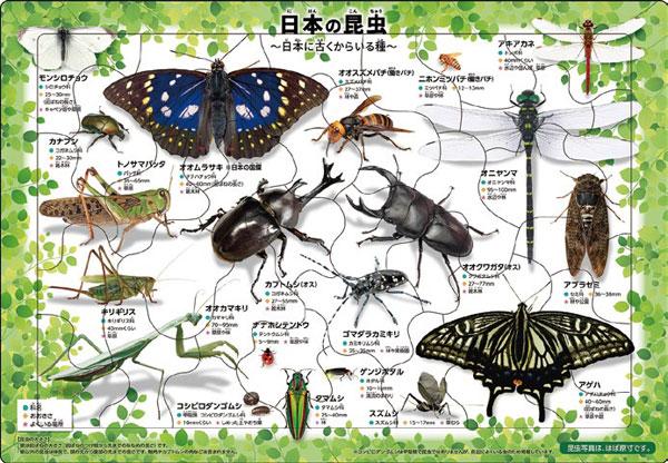 ジグソーパズル ピクチュアパズル 日本の昆虫 35ピース (25-008)[アポロ社]《在庫切れ》