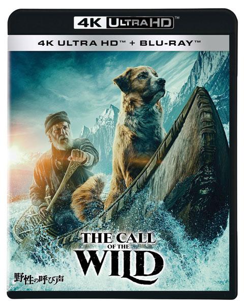 UHD BD 野性の呼び声 4K UHD (Blu-ray Disc)[ウォルト・ディズニー・スタジオ・ジャパン]《発売済・在庫品》