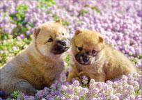 ジグソーパズル ペット ひなたぼっこ犬 108ピース (01-073)[エポック]《発売済・在庫品》