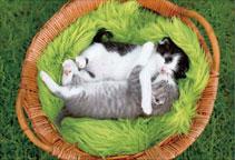 ジグソーパズル ペット おやすみにゃん 300ピース (26-355S)[エポック]《発売済・在庫品》