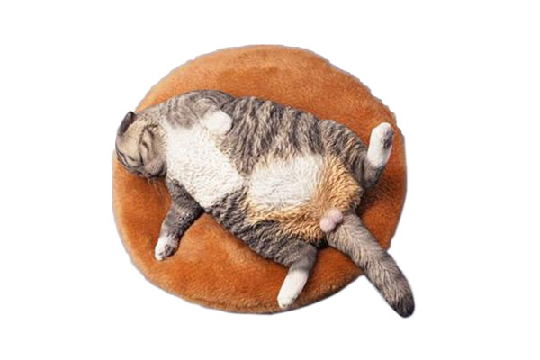 1/6 惰眠を貪る猫 A[JXKスタジオ]《09月仮予約》