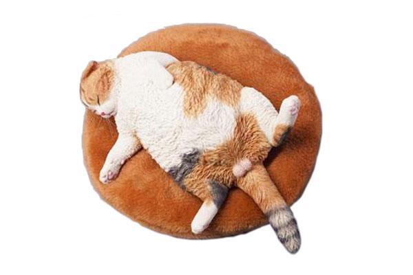 1/6 惰眠を貪る猫 C[JXKスタジオ]《09月仮予約》