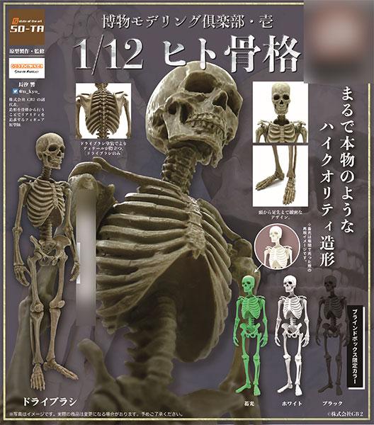 博物モデリング倶楽部・壱 1/12 ヒト骨格 4個入りBOX[SO-TA]《11月予約》