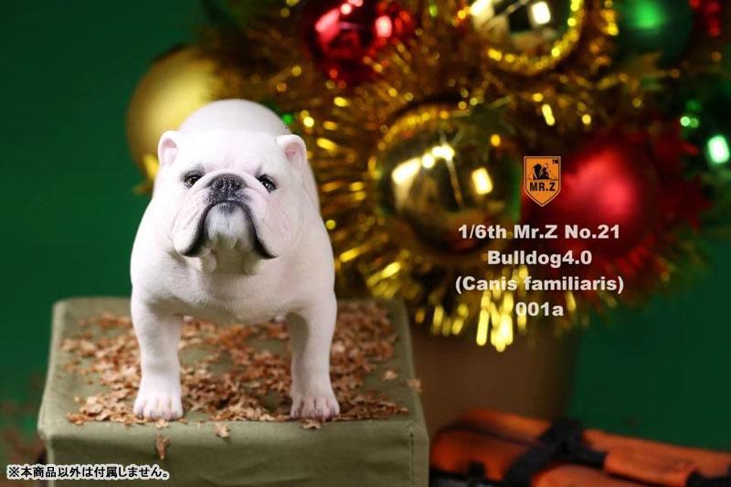 Preferred AmiAmi [Character & Hobby Shop] | 1/6 Bulldog Statue 4.0 2Figure  ZY05