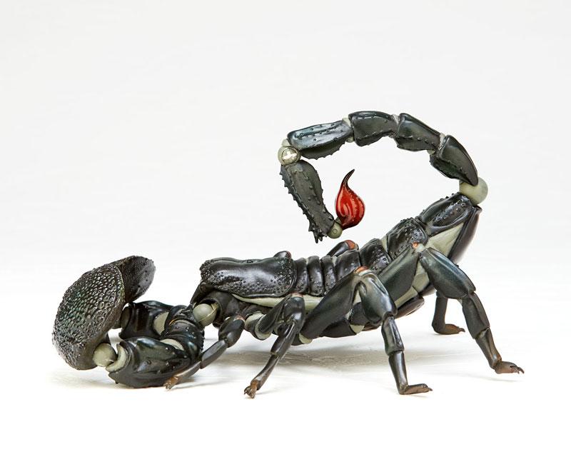 KAIYODO / REVO GEO 轉輪科技 / 節肢動物 帝王蠍 毒蠍