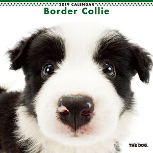 THE DOG カレンダー ボーダーコリー (2019年)