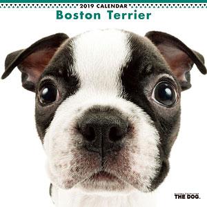 THE DOG カレンダー ボストンテリア (2019年)