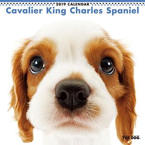 THE DOG カレンダー キャバリアキングチャールズスパニエル (2019年)