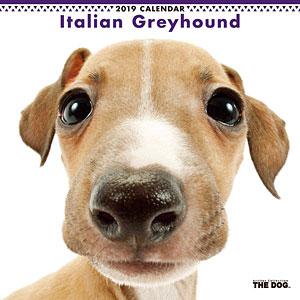THE DOG カレンダー イタリアングレイハウンド (2019年)