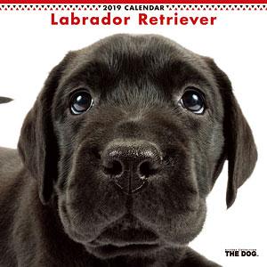 THE DOG カレンダー ラブラドールレトリーバー (2019年)