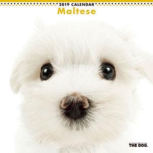 THE DOG カレンダー マルチーズ (2019年)