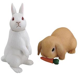 アニア AS-34 ウサギ(日本白色種&ロップイヤー)