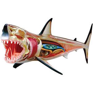 立体パズル 4D VISION 動物解剖モデル No.02 ホオジロ鮫解剖モデル